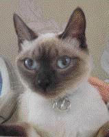 Mothercat Abbie