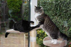 Pascale's katten